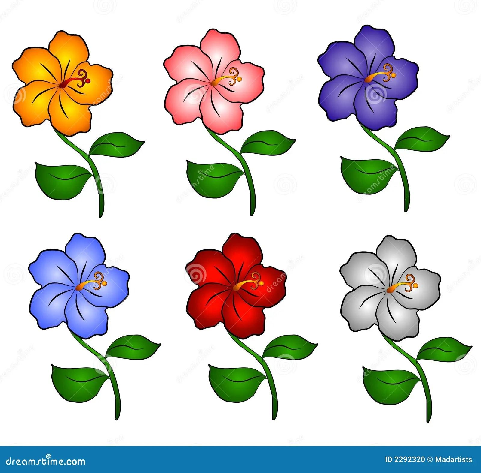 6 Hawaii Hibiscus Flowers Stock Photo