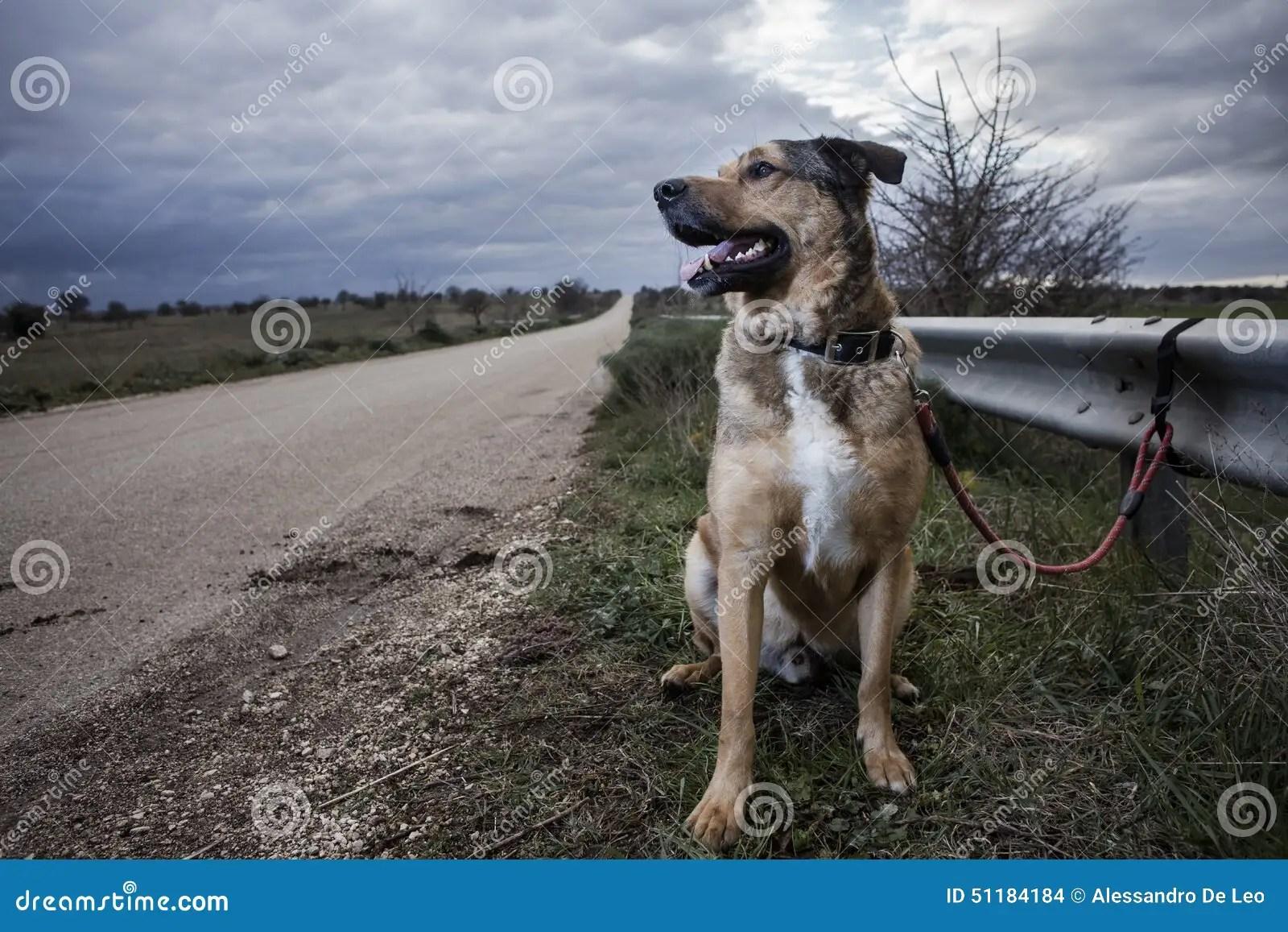 Abandoned Dog Stock Photo Image 51184184