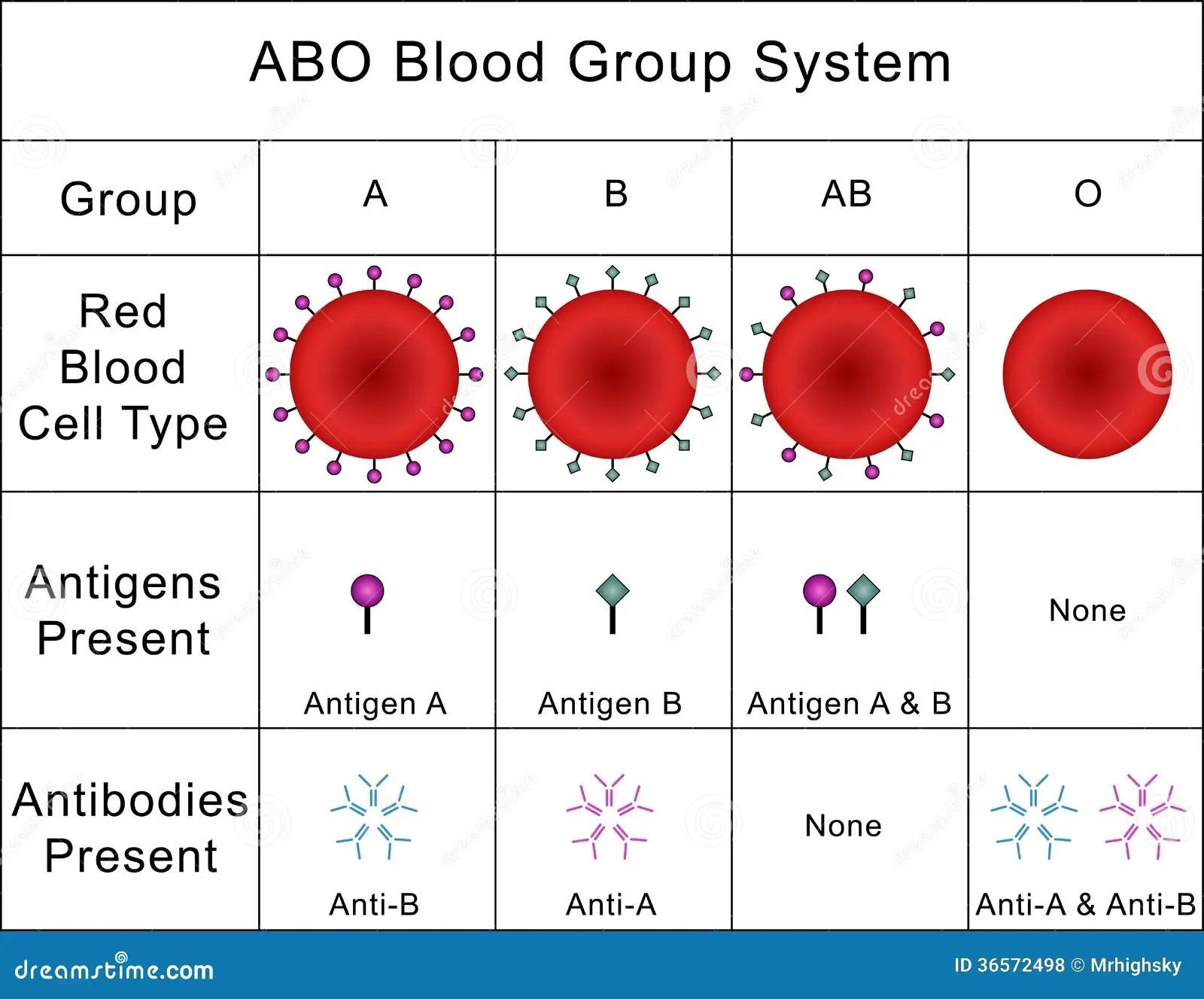Abo Blood Group System Stockfoto Illustration Von Stu