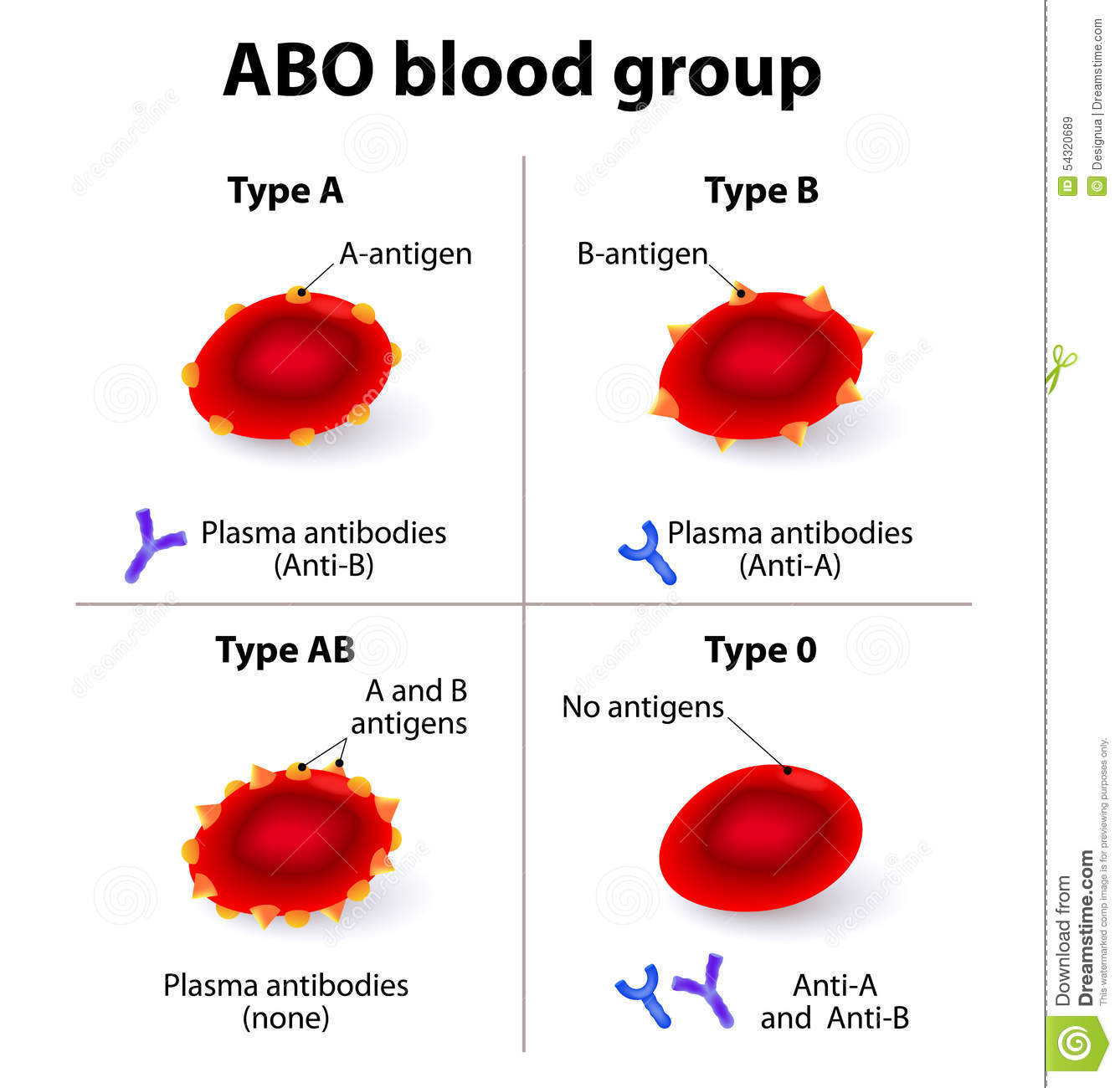 Abo Blood Groups Stock Vector