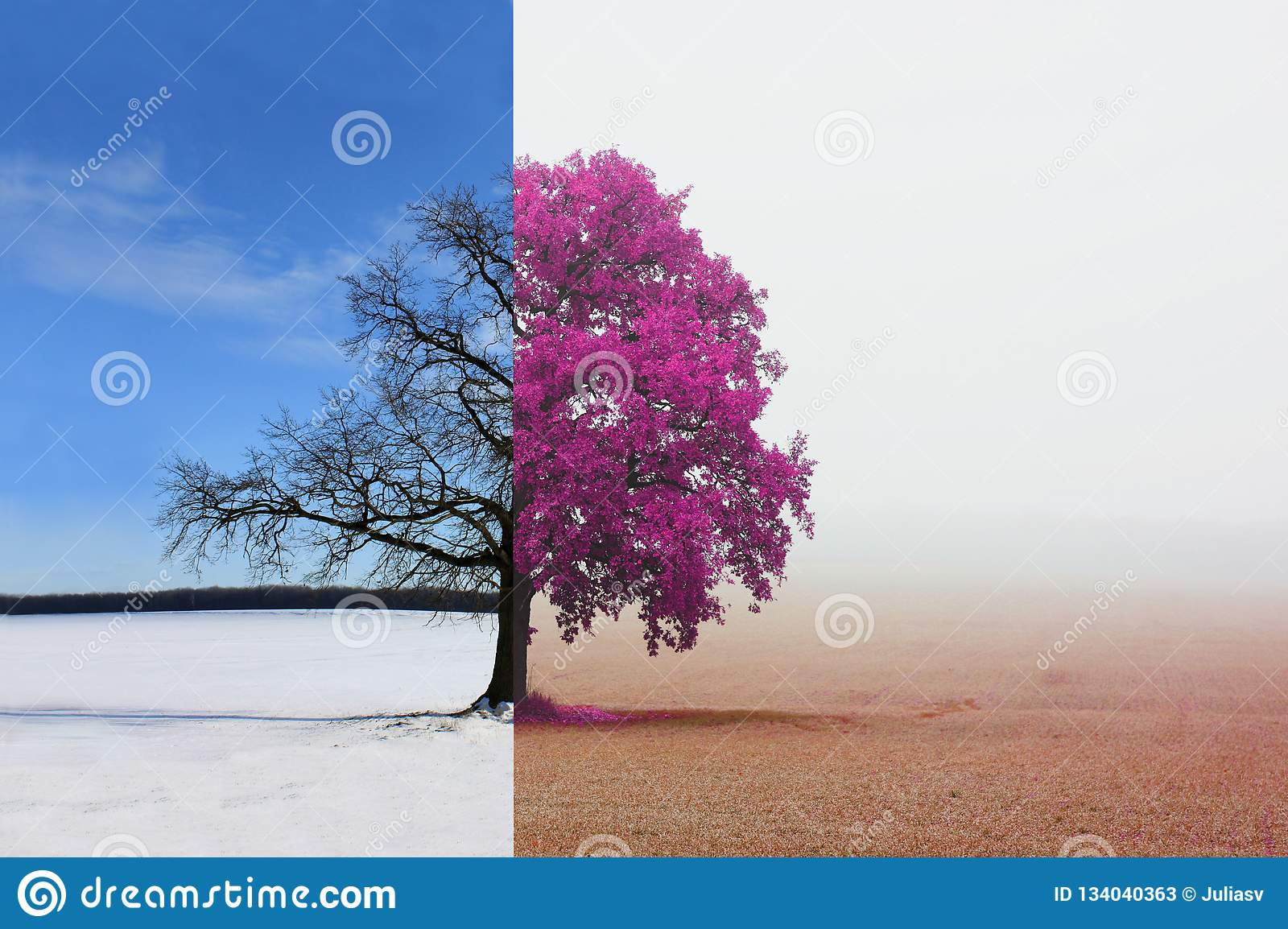 Different Sides Of Tree With Changing Seasons From Winter