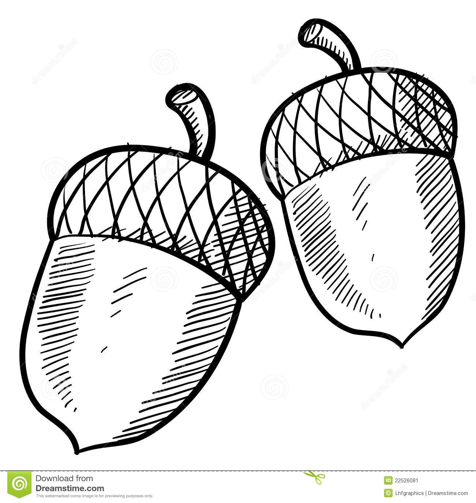 Acorn Sketch Stock Image