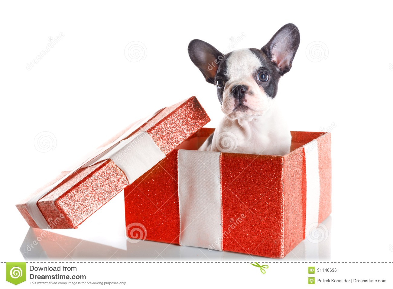 Adorable French Bulldog Puppy In The Gift Box Royalty Free