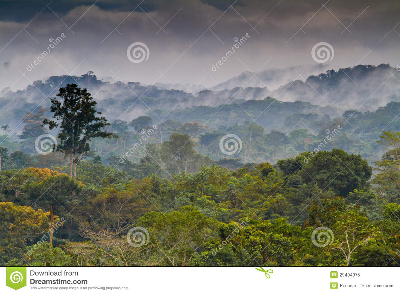 Watch landscaping from diy landscaping budget tips 02:10 landscaping budget tips 02:10 cutting corners isn't the best way to end up with a stellar landscape. African Rainforest Stock Image Image Of Light Green 29404975