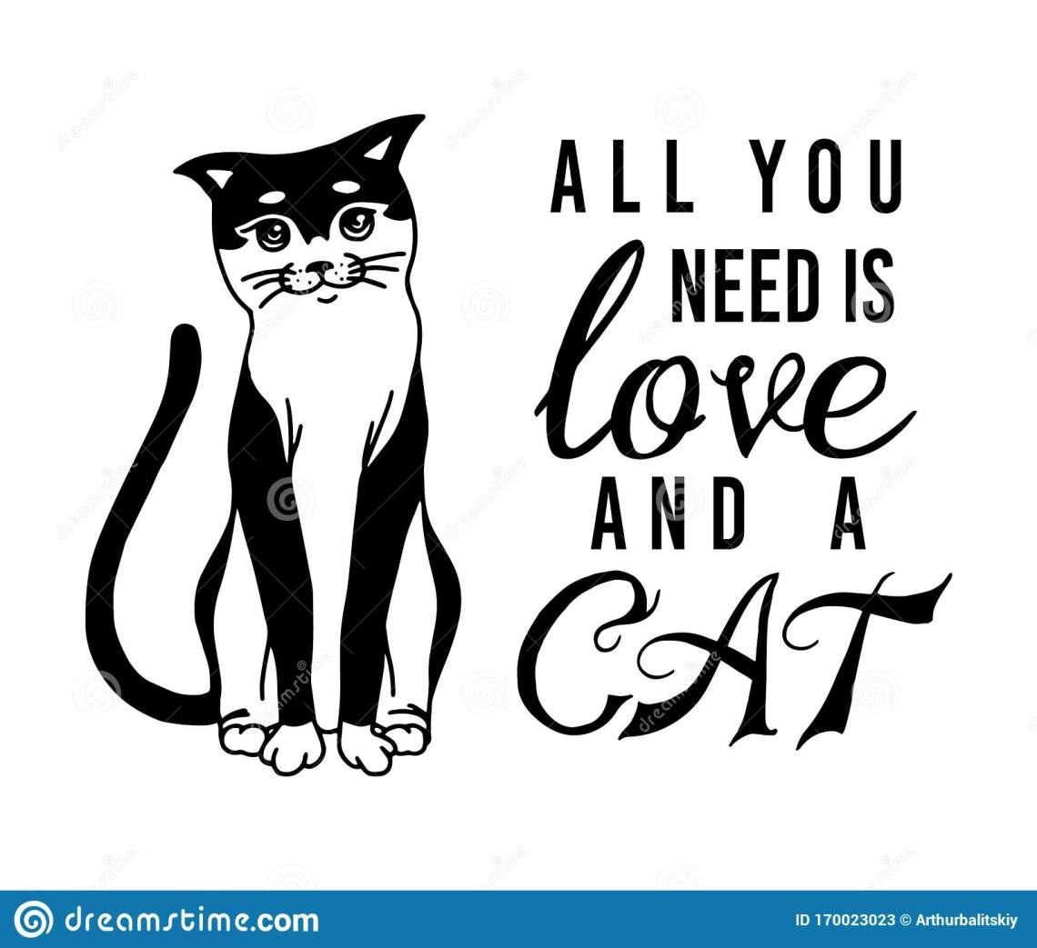 Download All You Need Is Love And A Cat. Meow Power. Domestic Kitty ...