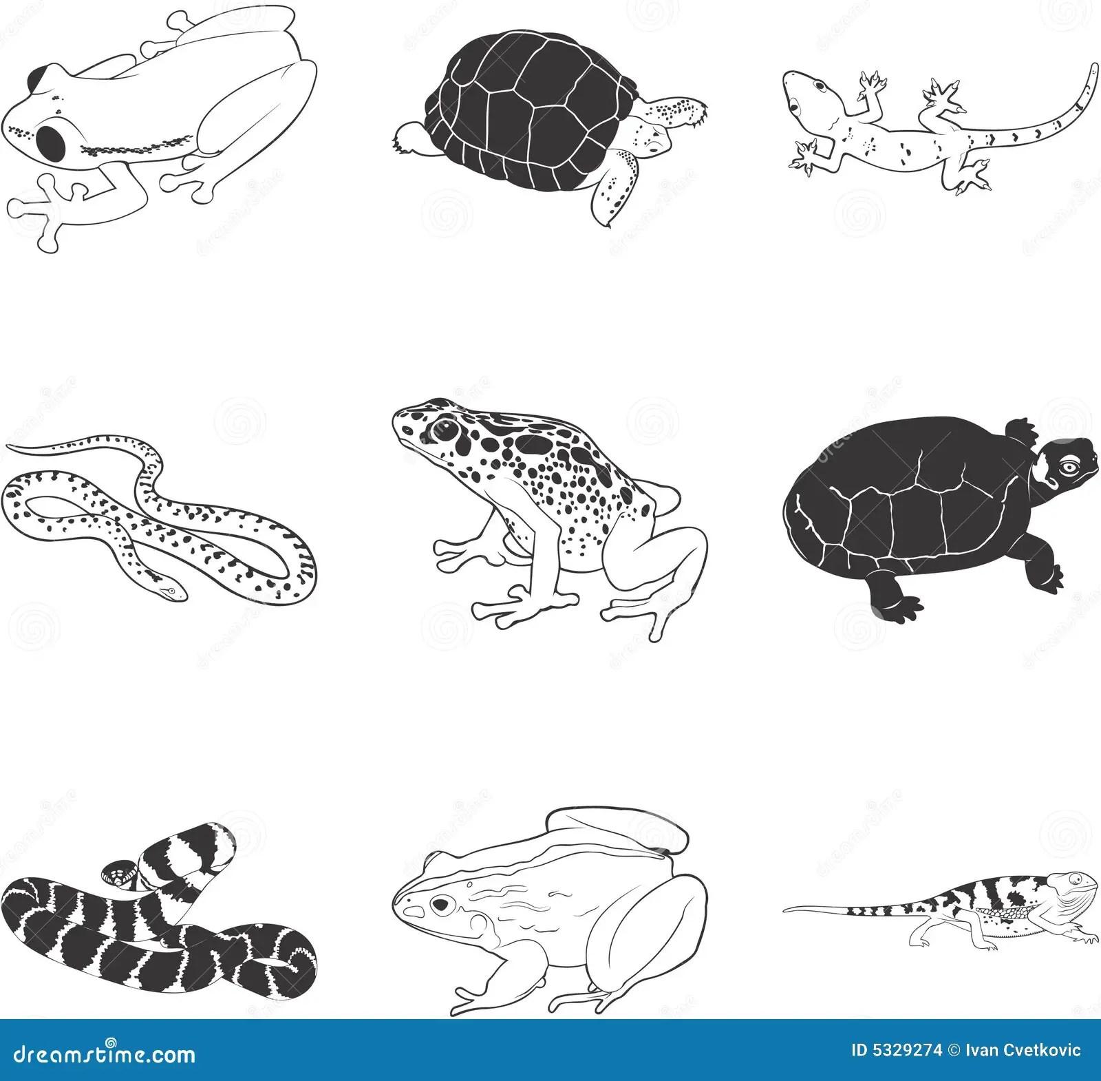 Amphibien Und Reptilien Vektor Abbildung Illustration Von
