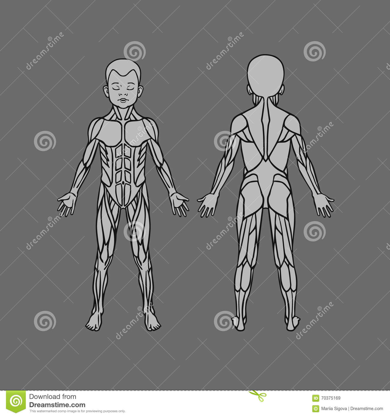 Anatomy Of Children Muscular System Exercise And Muscle