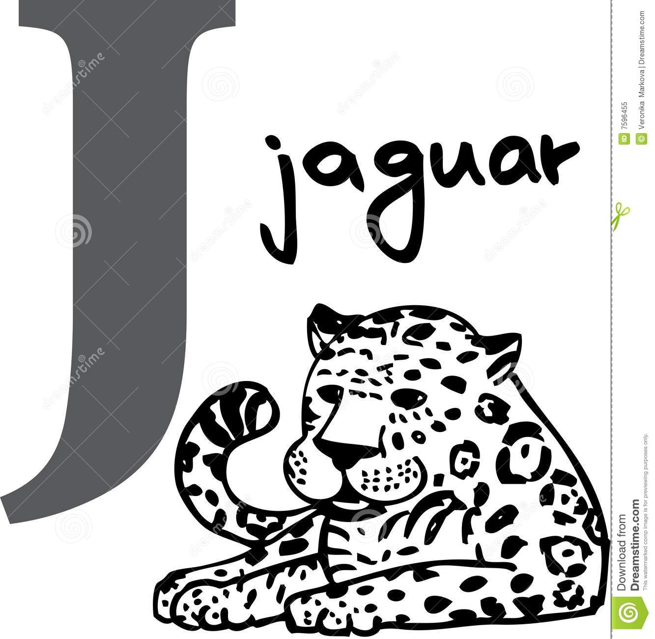 Animal Alphabet J Jaguar Royalty Free Stock Photo