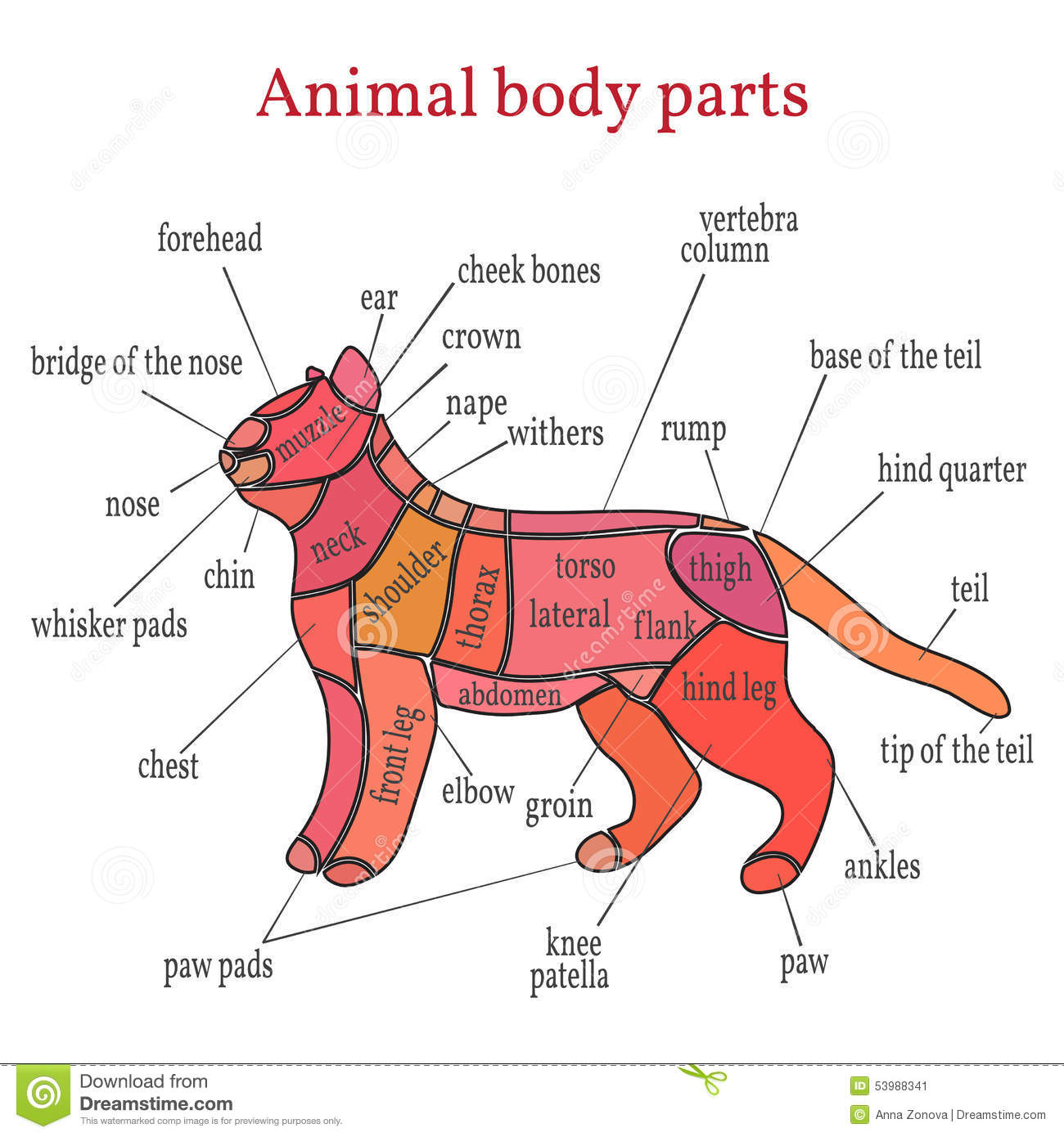 Animal Body Parts Stock Vector