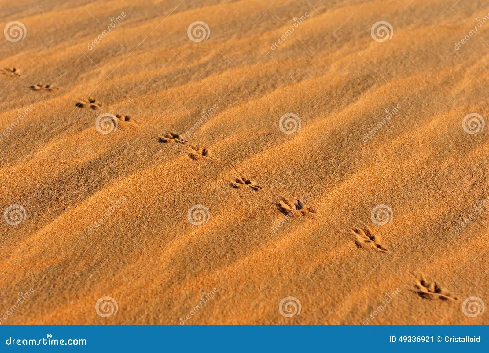 Animal Footprints Stock Photos