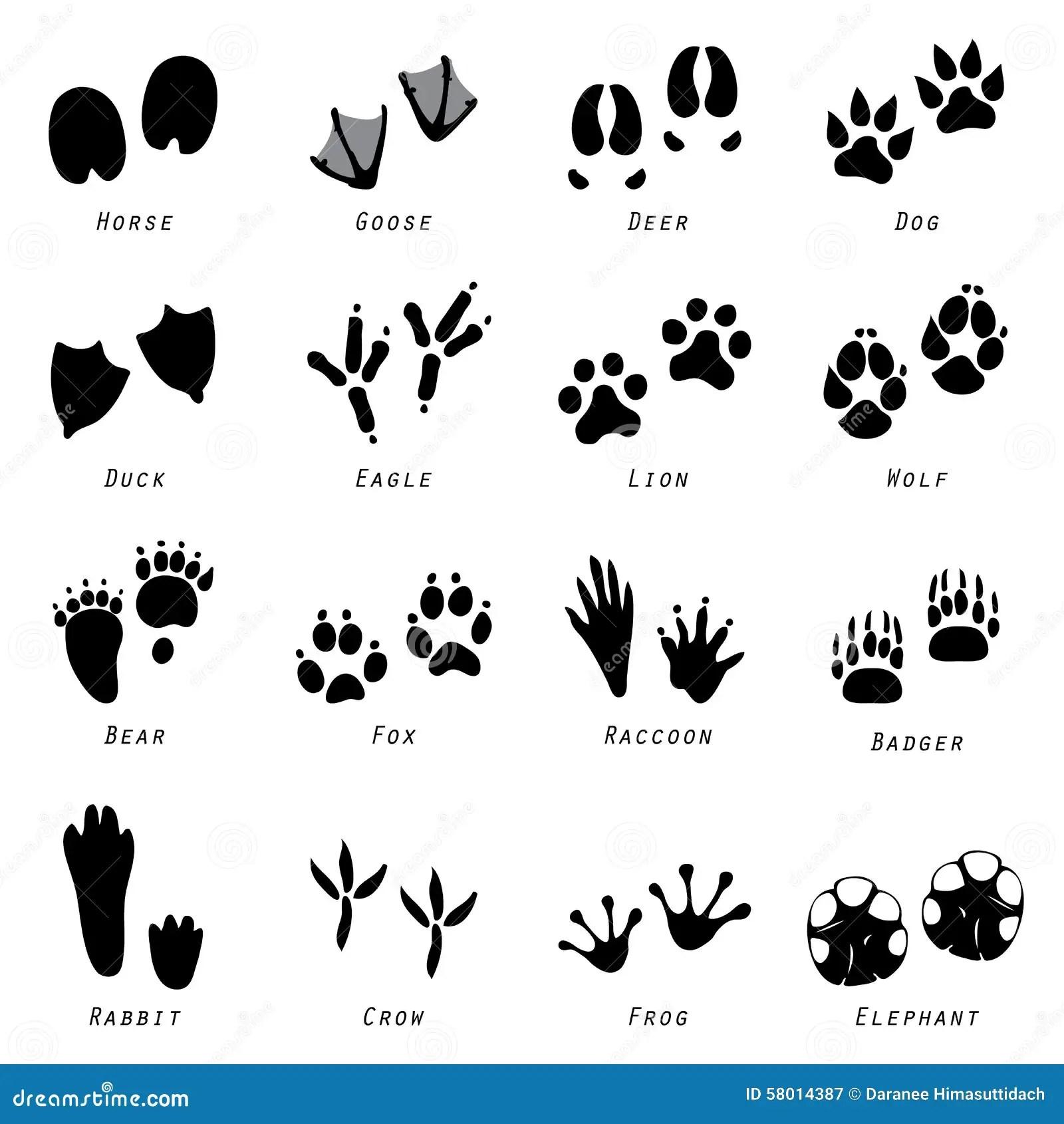 Animal Spoor Footprints Icon Vector Stock Vector