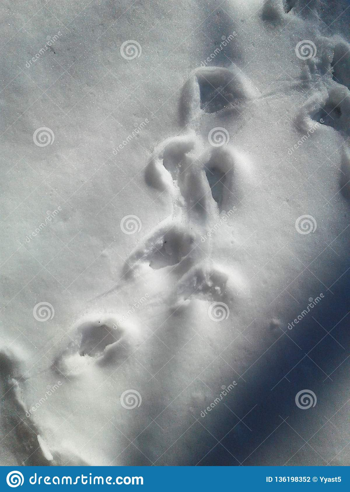 Animal Tracks In The Snow Winter Landscape Stock Photo