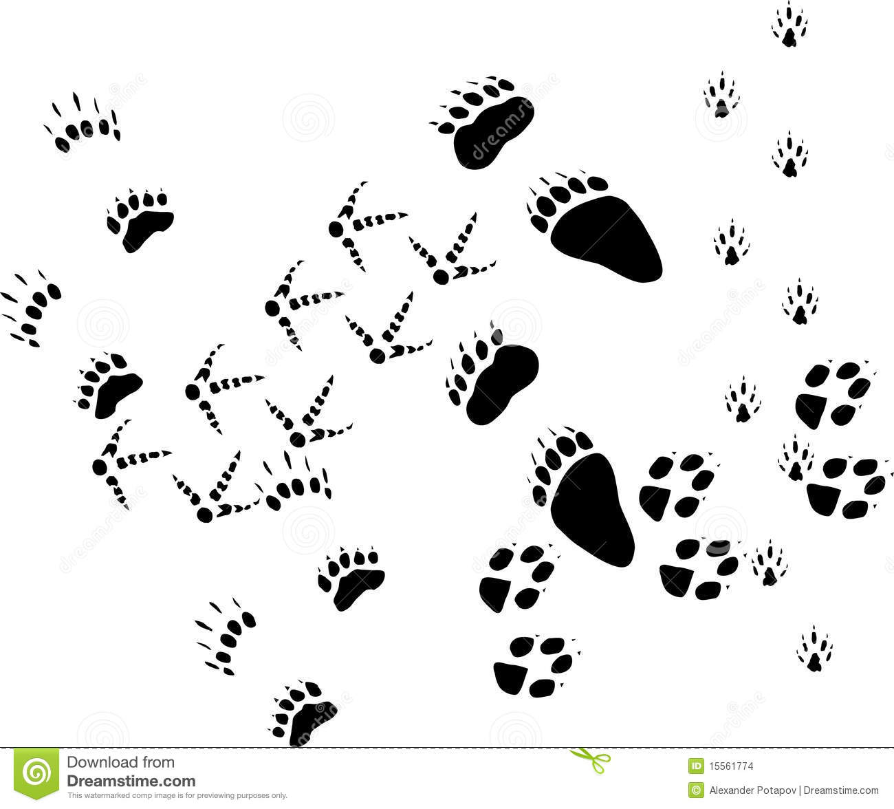 Animal Tracks On White Stock Images