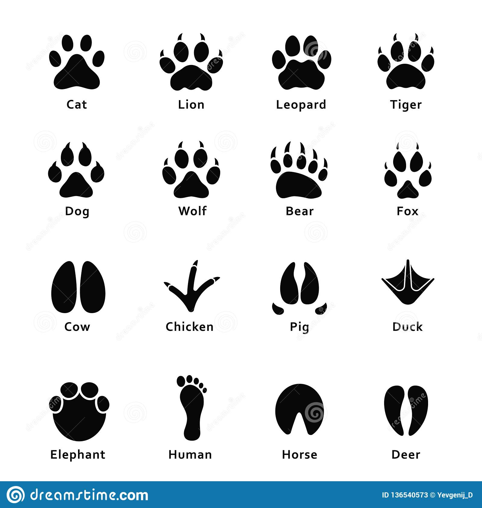 Animals Footprints Paw Prints Set Of Different Animals
