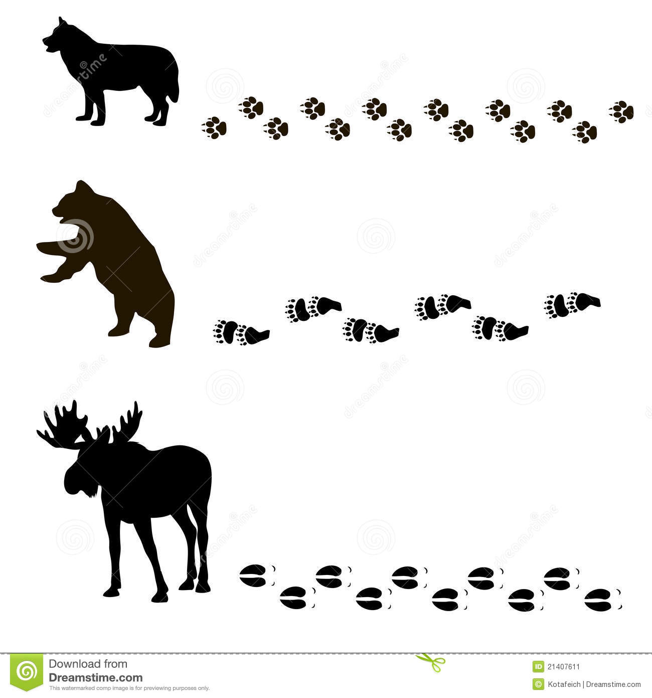 Animals And Their Tracks Stock Vector Illustration Of