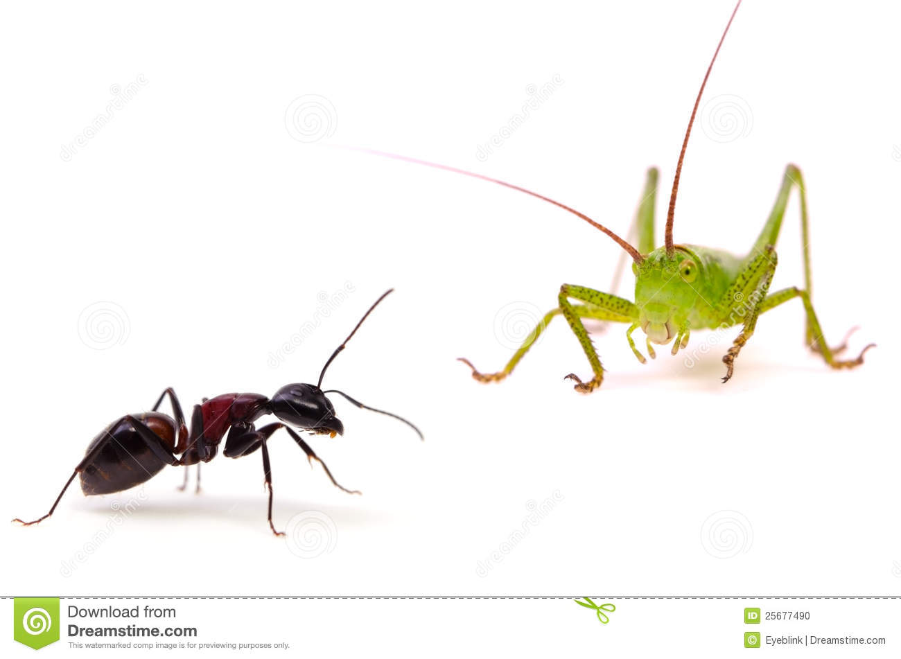 The Ant And The Grasshopper Stock Photo