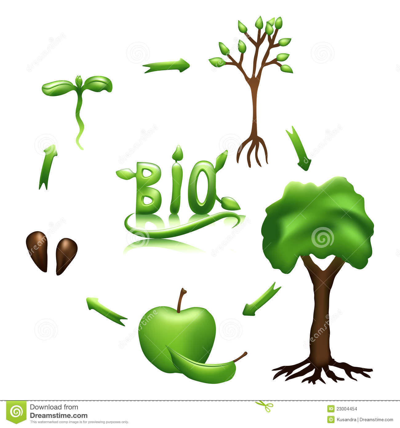 Apple Life Cycle And Bio Sign Stock Vector