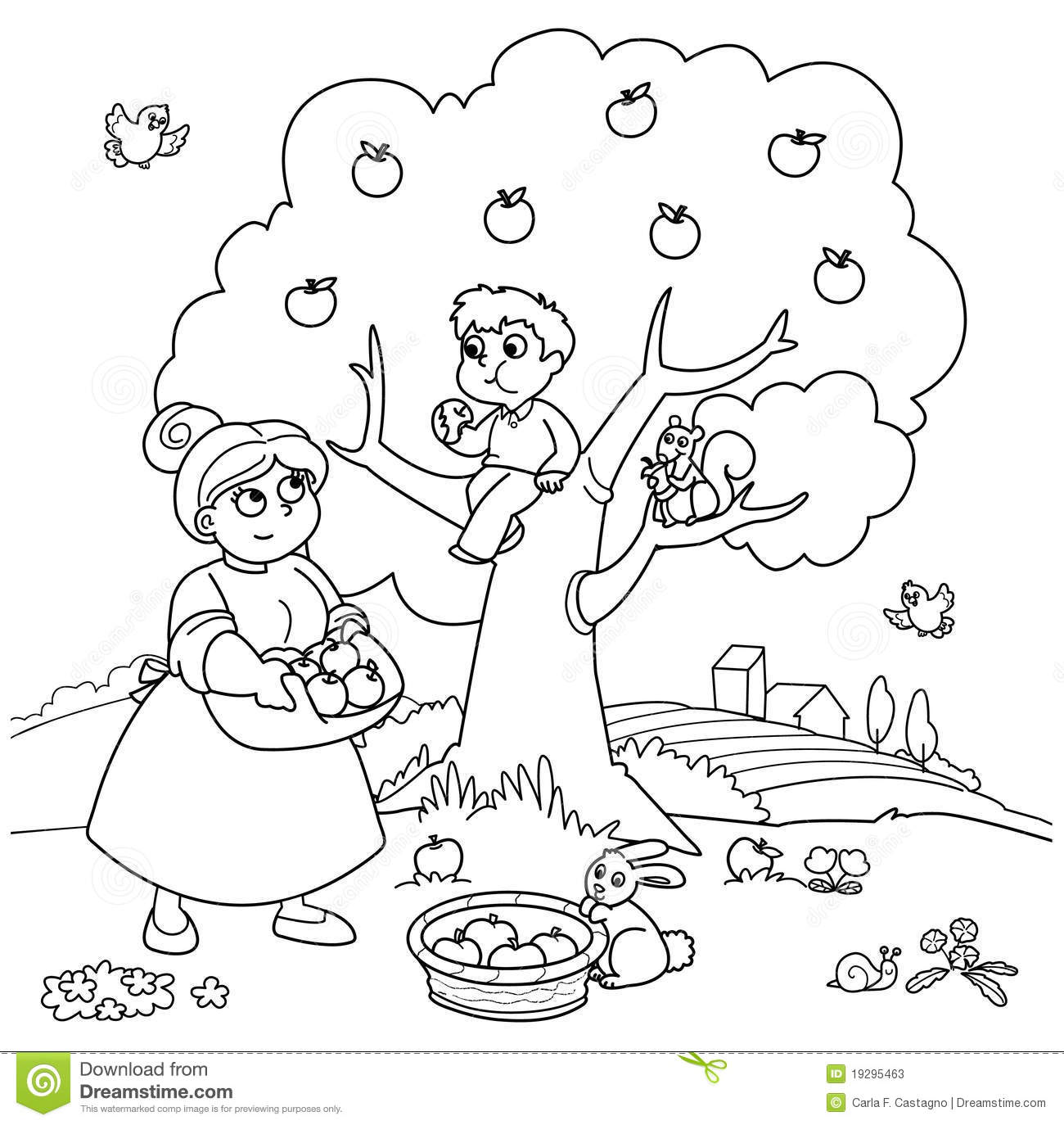 Apple Tree Stock Vector Illustration Of Cultivation