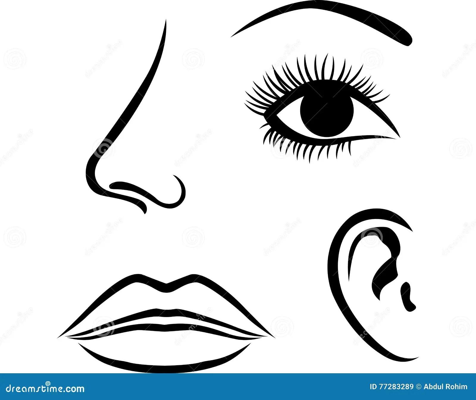 Augen Nase Lippen Und Ohrikone Vektor Abbildung