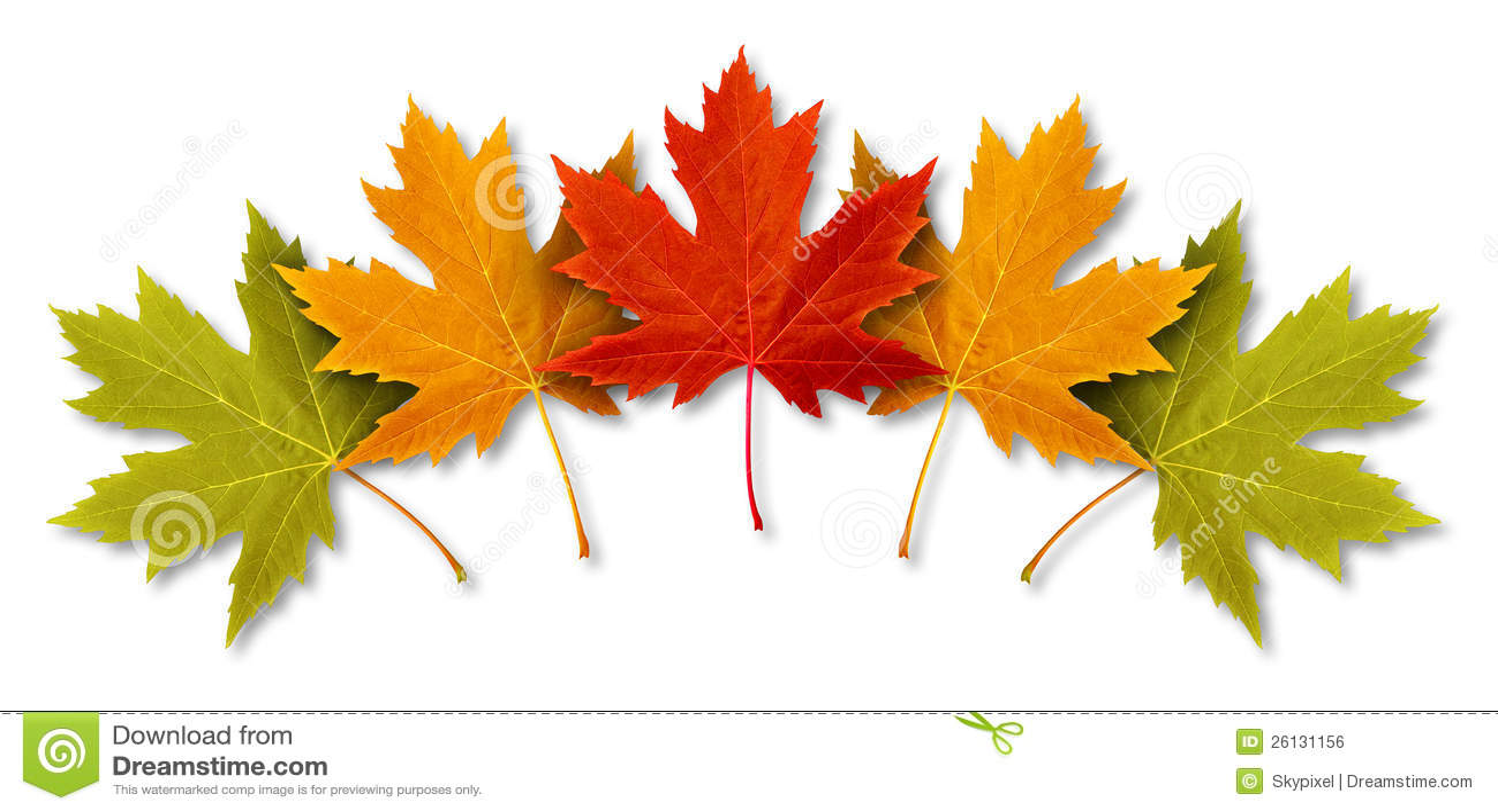 Autumn Leaves Royalty Free Stock Image Image 26131156
