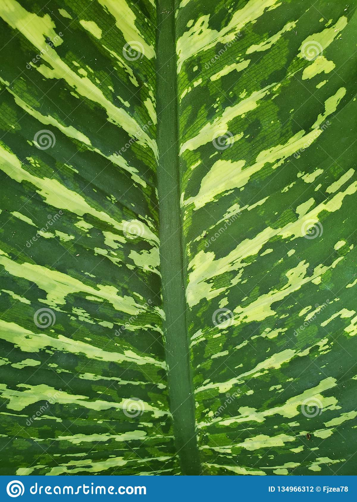Approaching A Leaf Of Tropical Plant With Green And Yellow