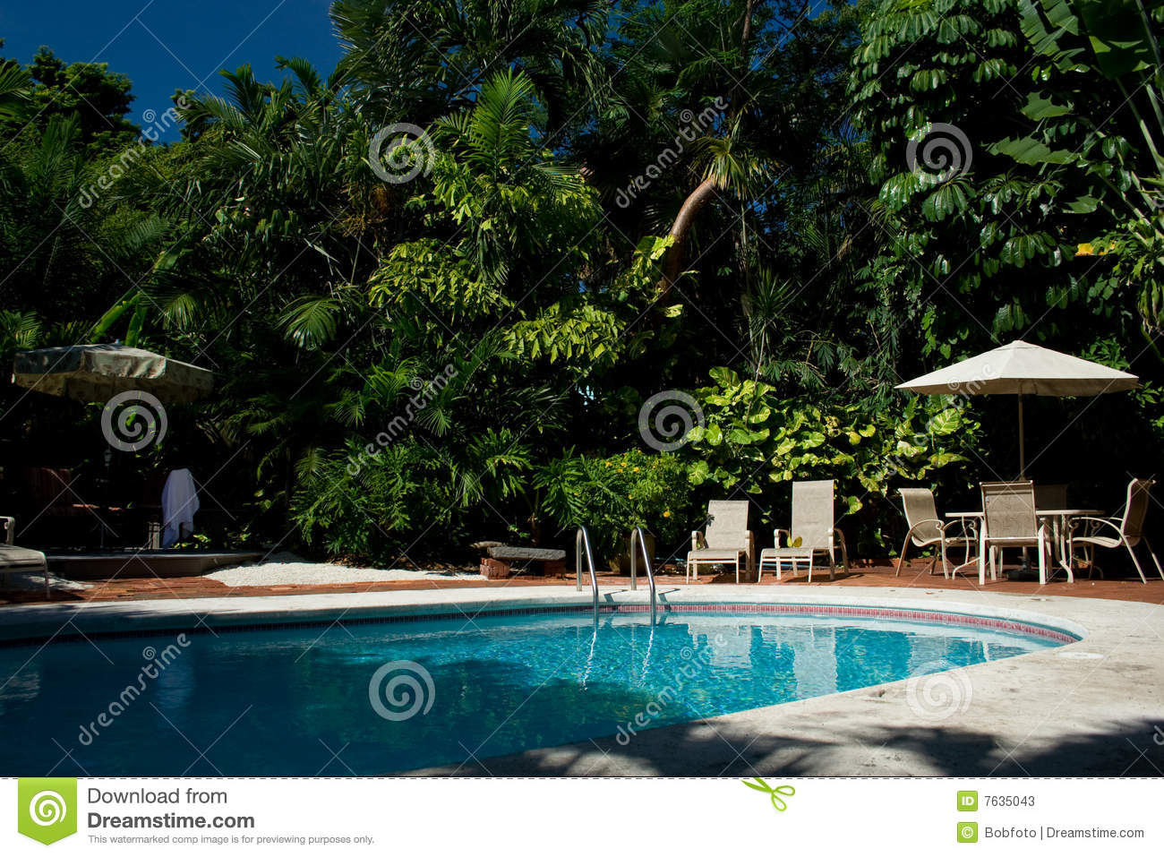 Backyard Pool With Palm Trees Stock Image Image 7635043