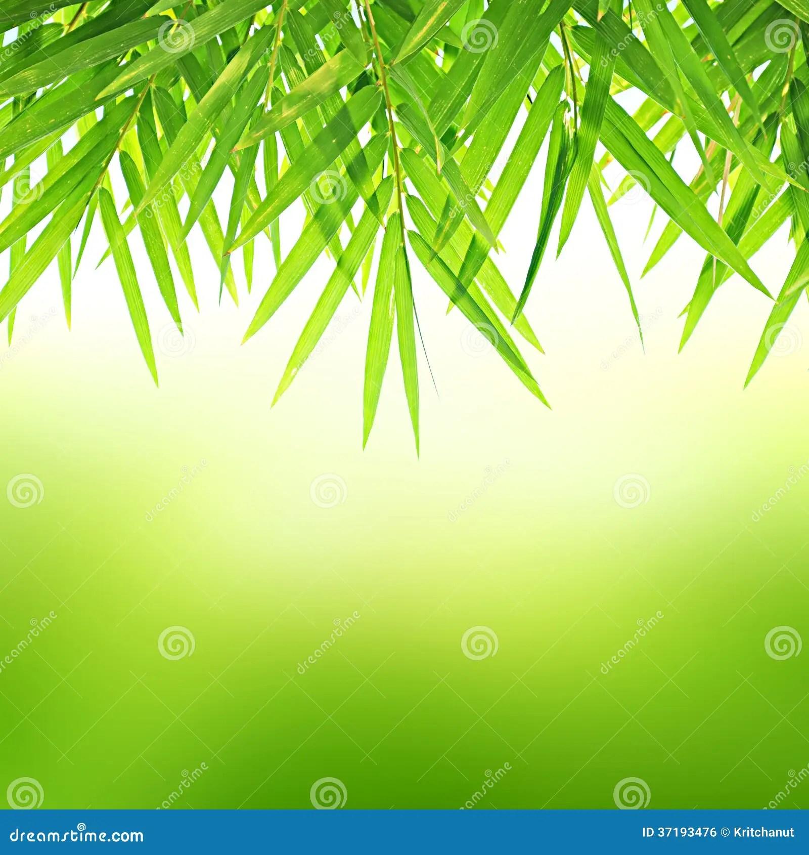 Garden Decoration Bamboo