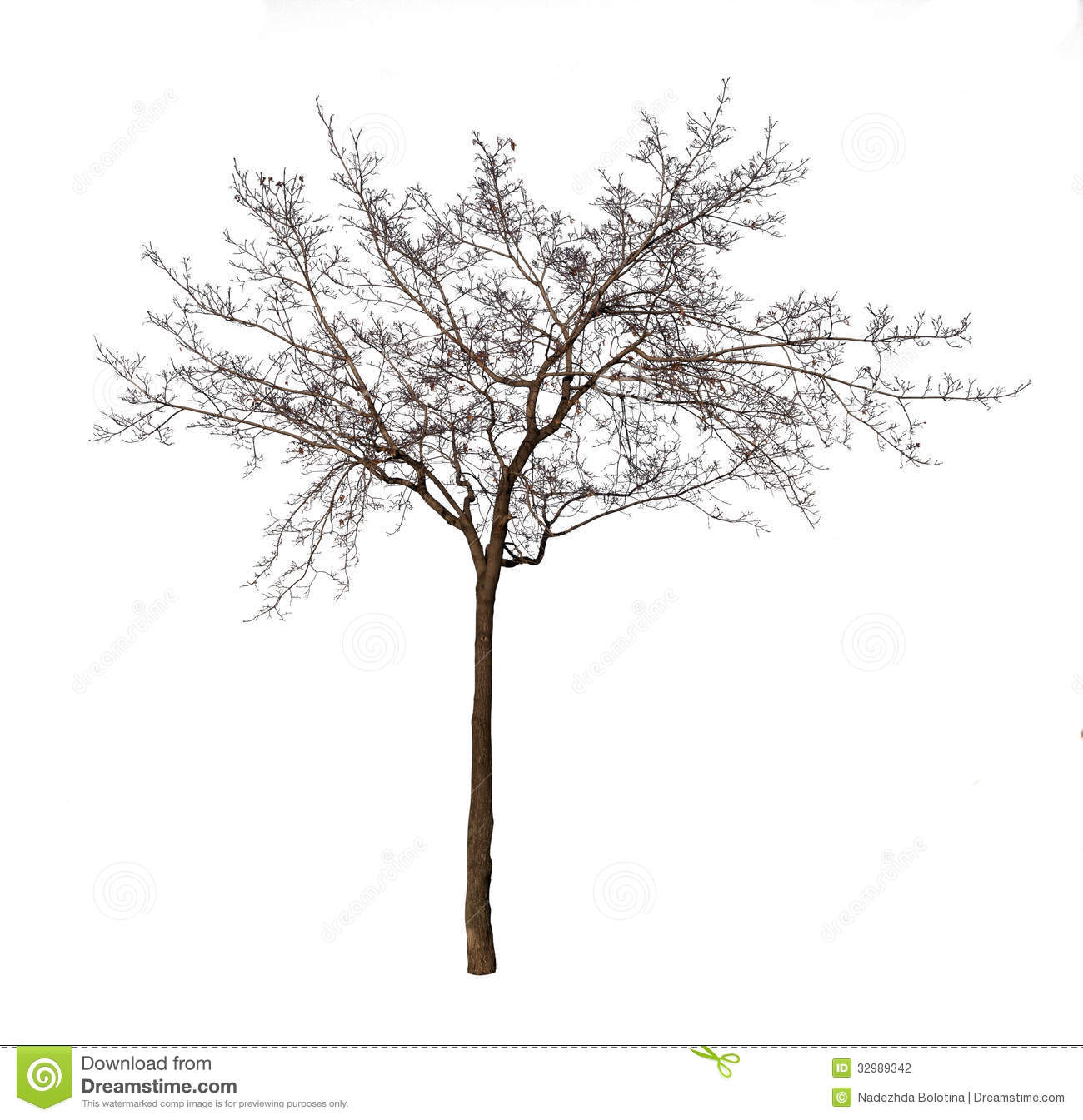 Bare Tree Isolated Over White Stock Photo