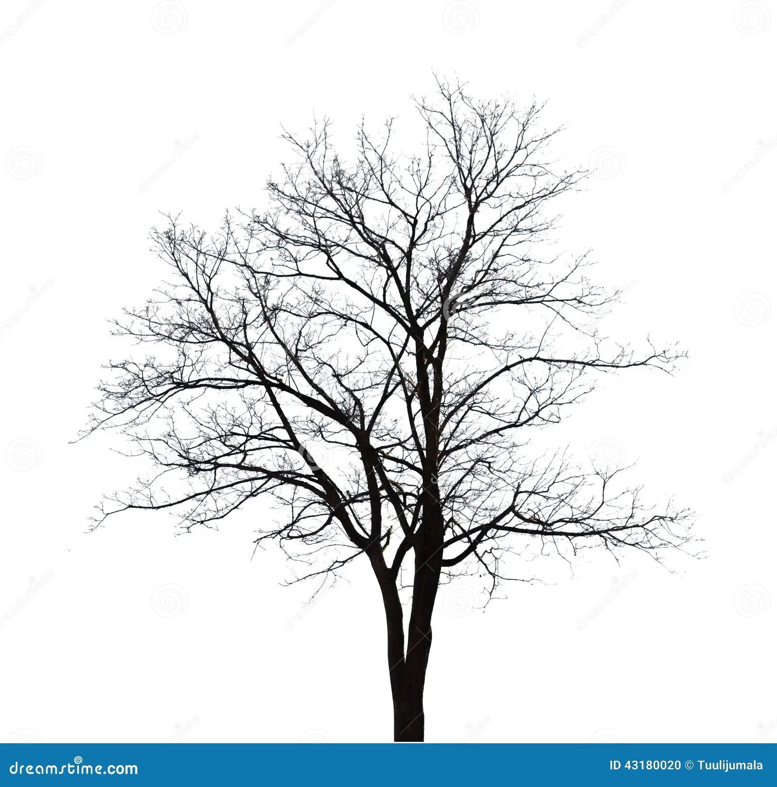 Bare Tree Stock Illustration