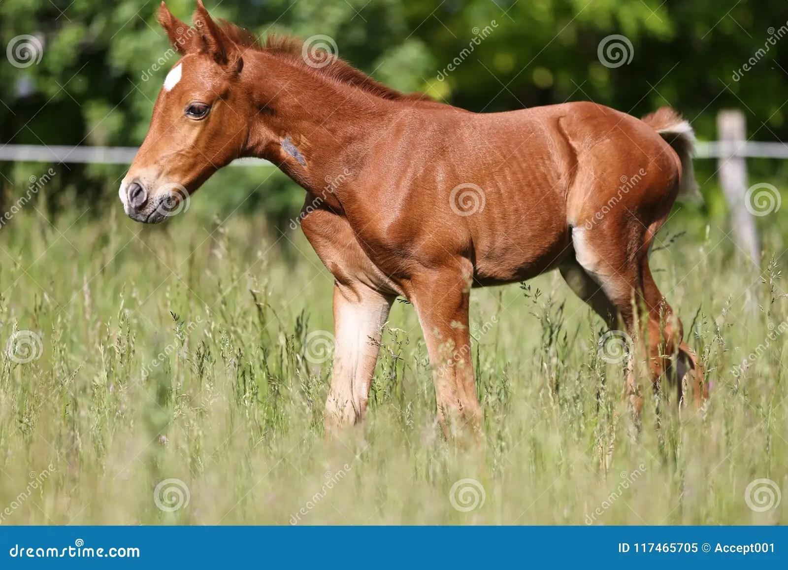Newborn Chestnut Baby Horses