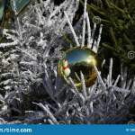 Beautiful Snowy Branch Of A Christmas Tree Decorated With Gold Ball Stock Image Image Of Ball Tree 190805807