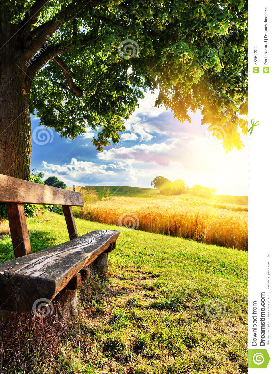Beautiful Summer Landscape With Wooden Bench Stock Photo