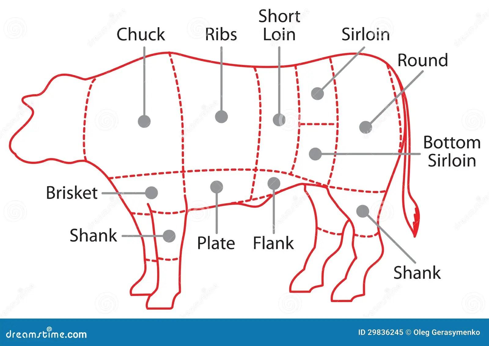 Beef Chart Poster Stock Illustration Illustration Of Farm