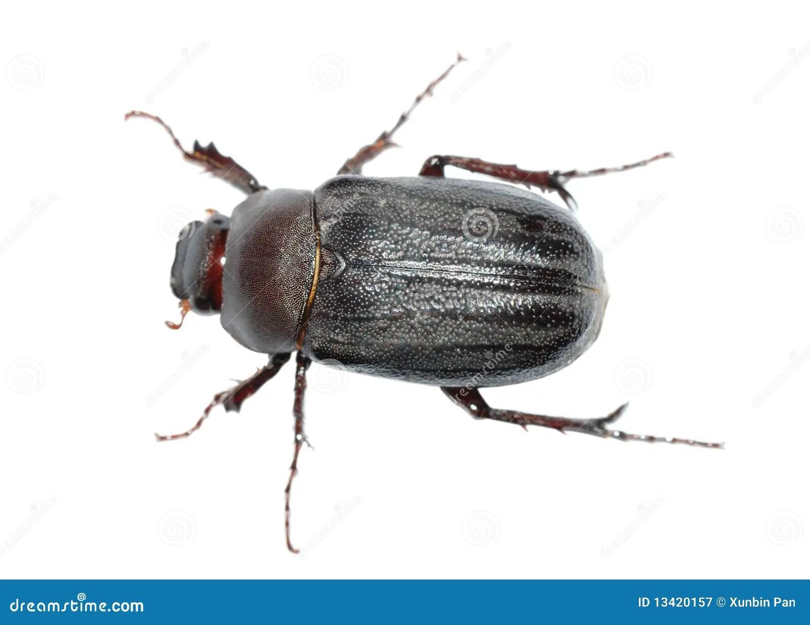Beetle Bug Stock Image Image Of Background Isolated