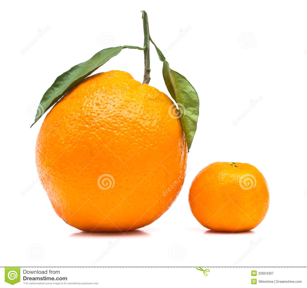 Big And Small Orange Stock Image Image Of Leaf Shape