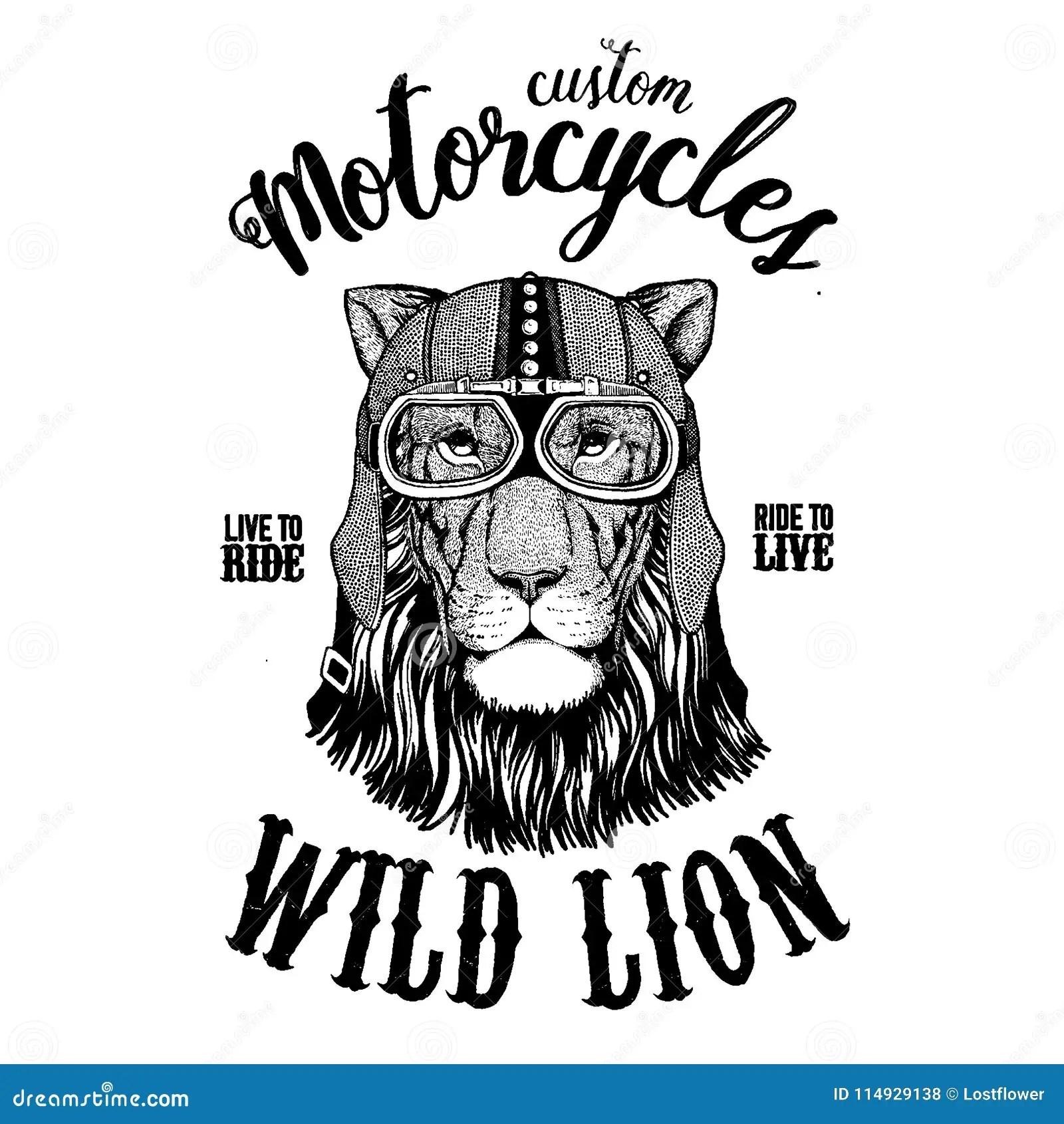 Wild Lion Biker Motorcycle Animal Hand Drawn Image For