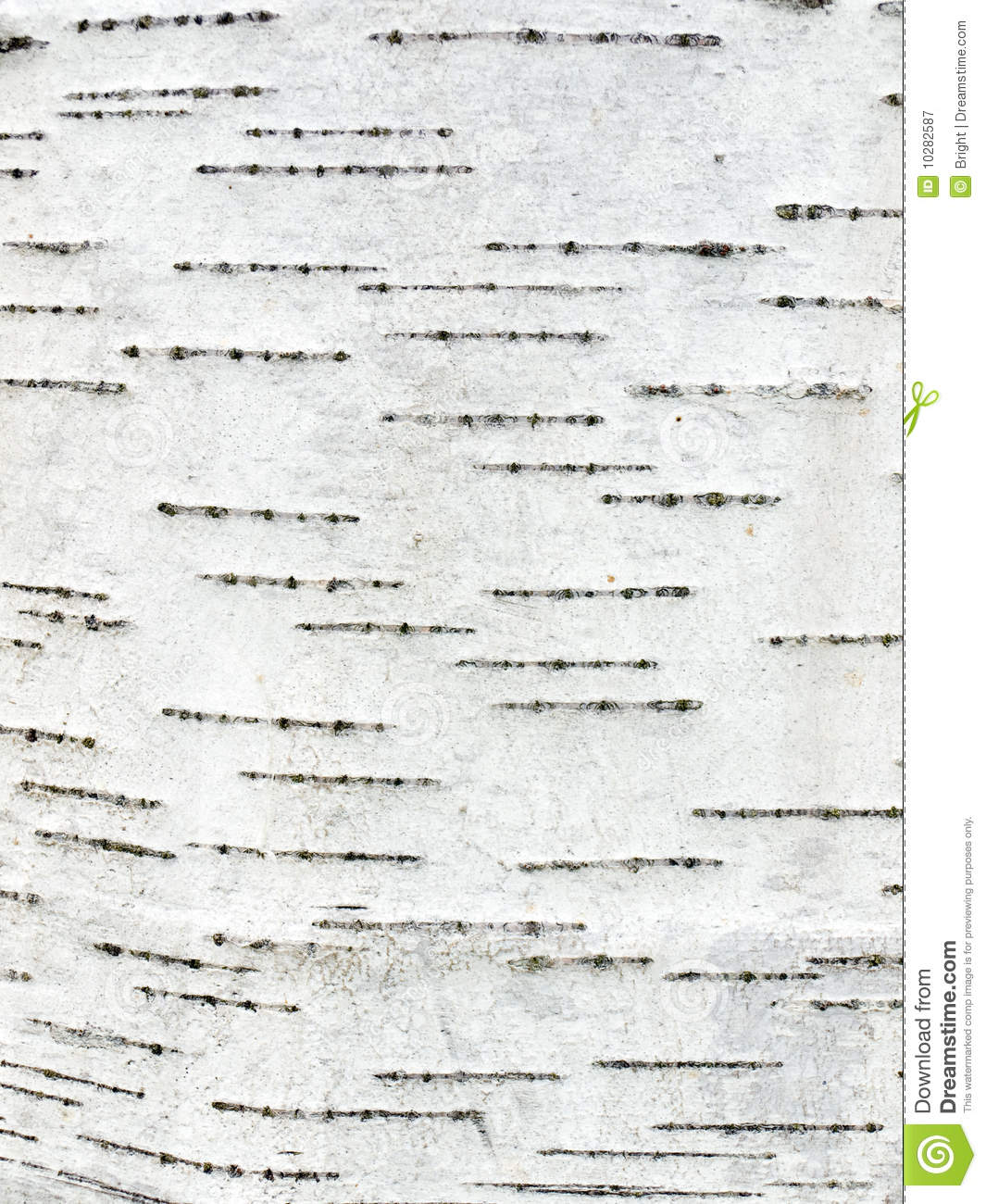 Birch Bark Stock Image Image Of Papyrus White Surface