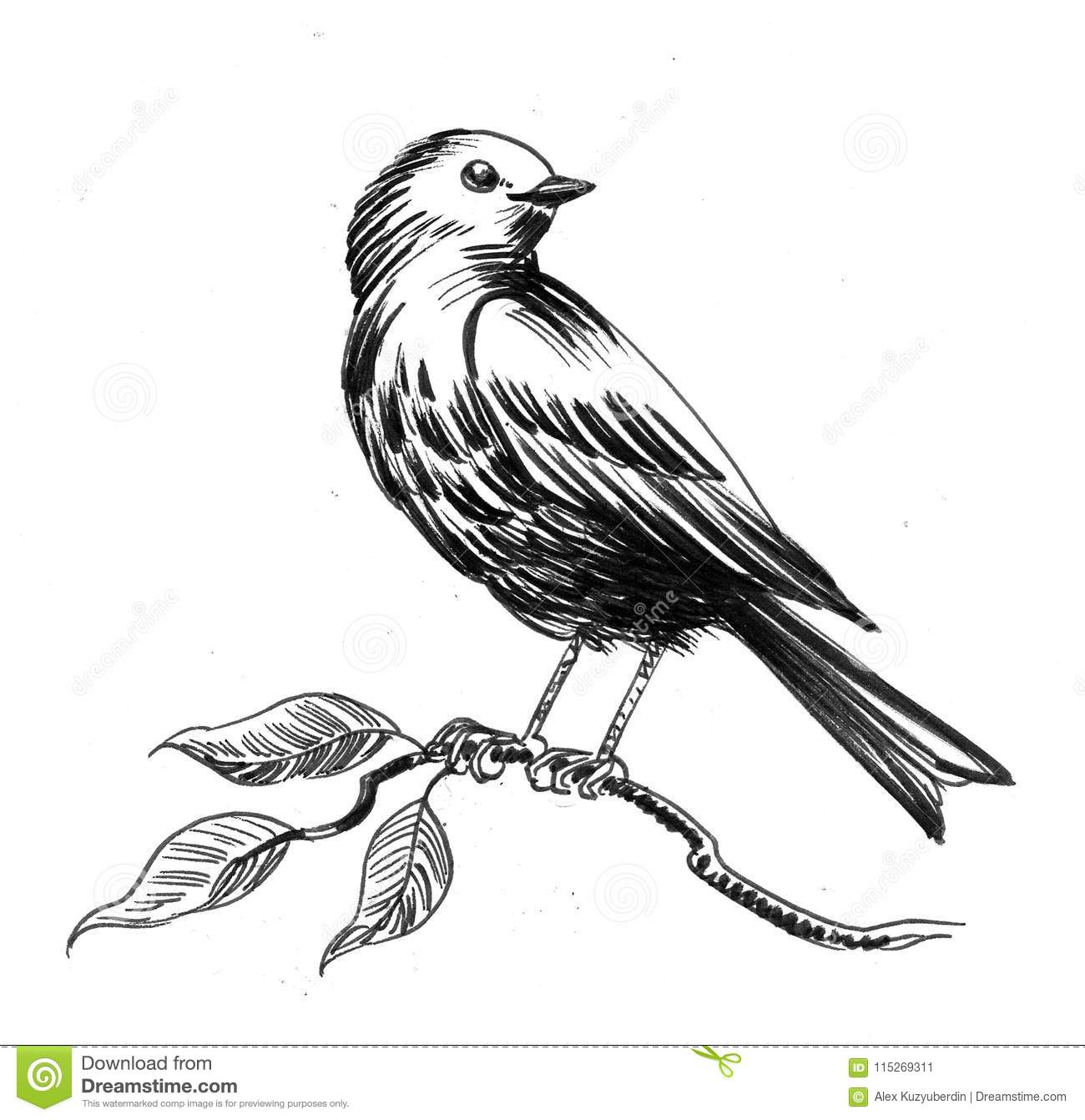 Bird On A Tree Stock Illustration Illustration Of Drawing 115269311