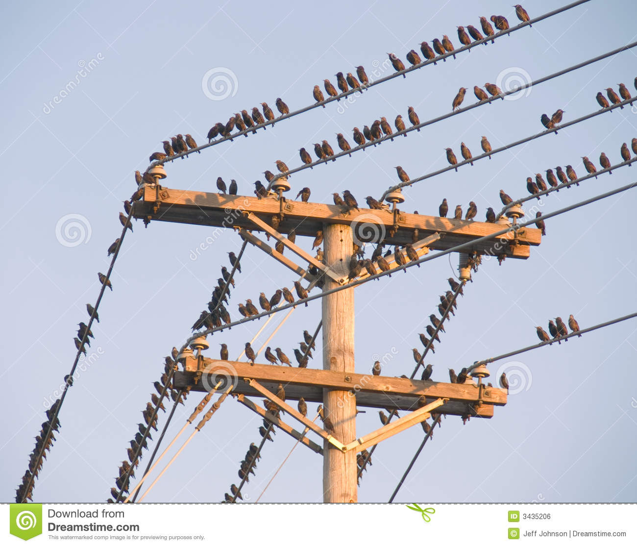 Abstract Birds On Telephone Wire
