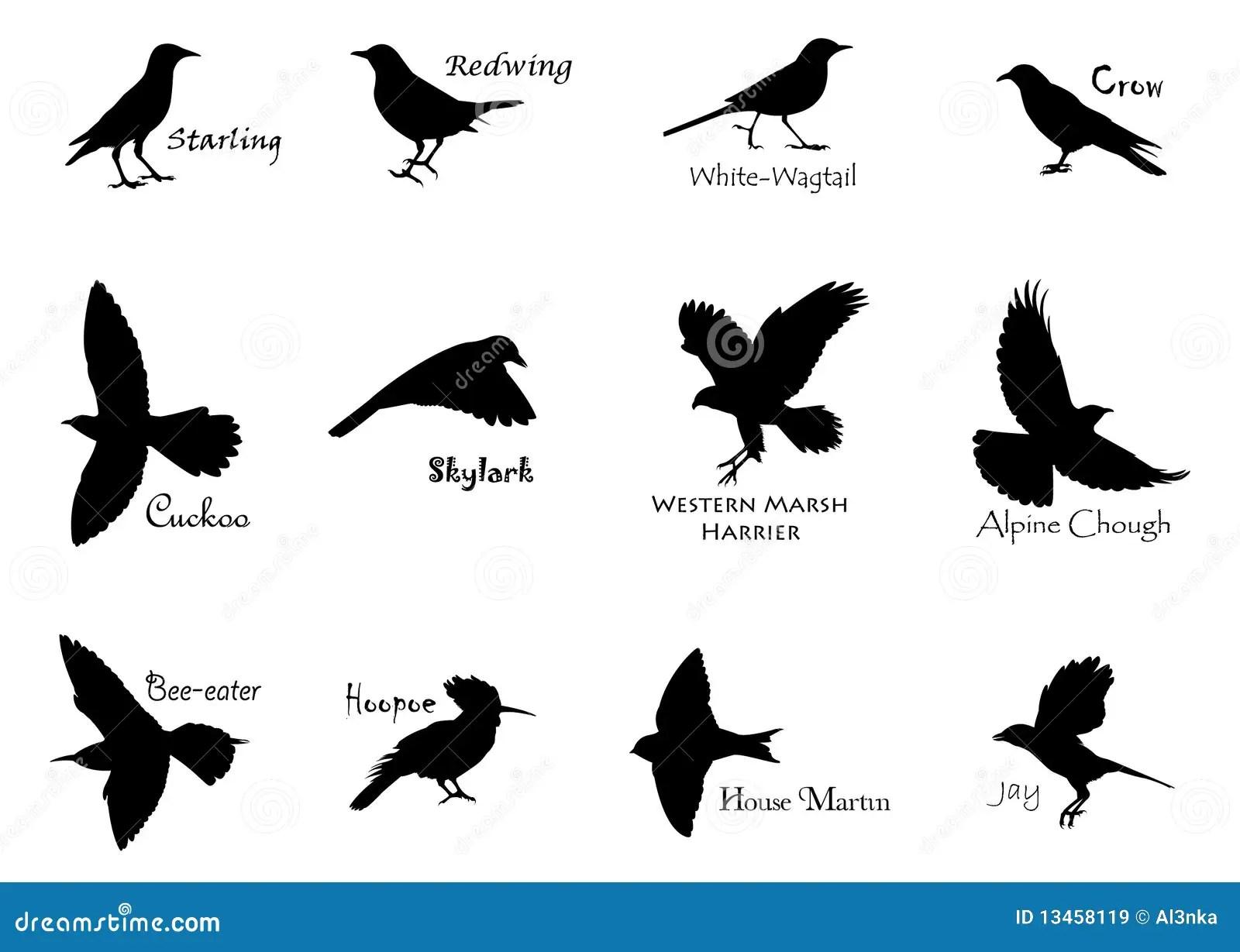 Black Birds Stock Vector Illustration Of Alpine Aloft