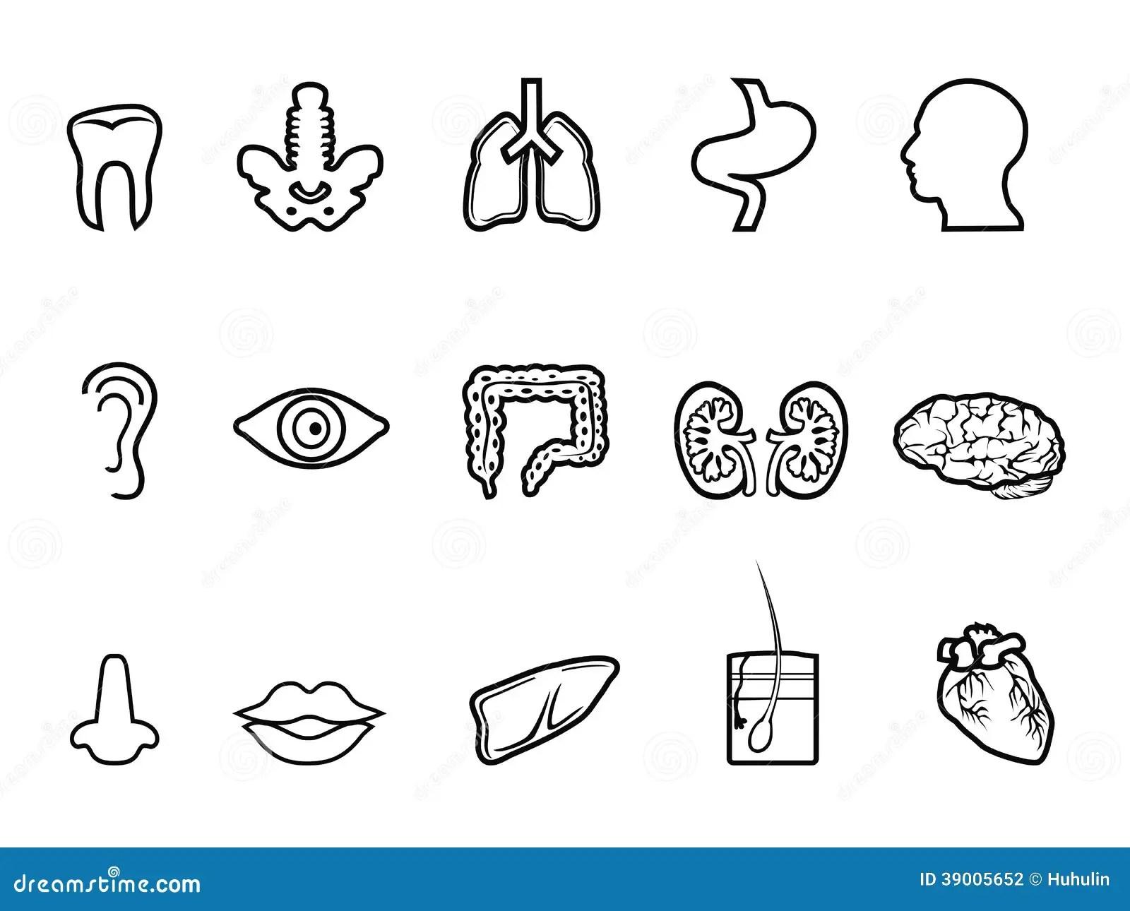 Black Human Anatomy Outline Icon Stock Vector