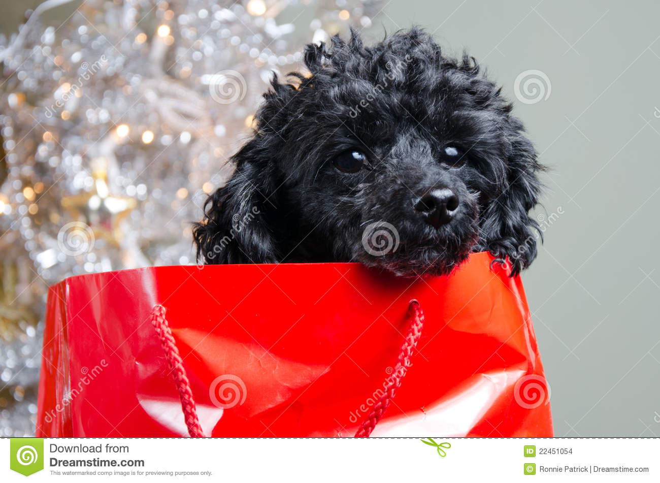 Black Puppy In Red Gift Bag Stock Images Image 22451054