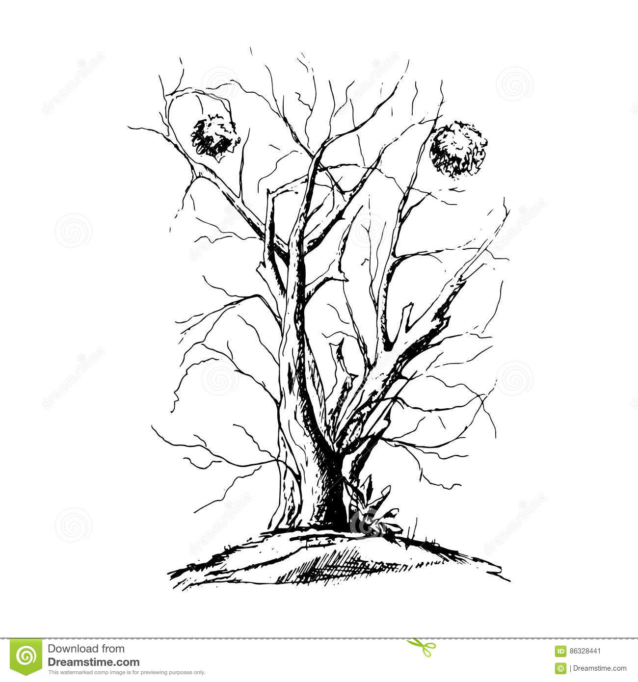 Black Tree With Roots Isolated White Background Stock