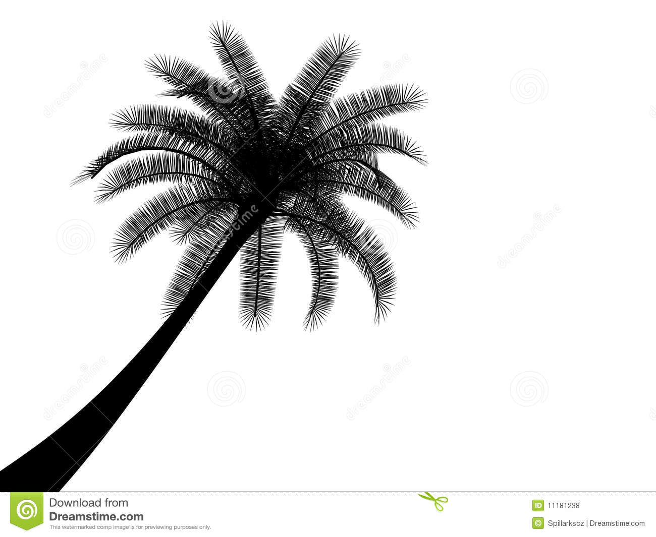 Black And White Tropical Palmtree Palm Tree Stock