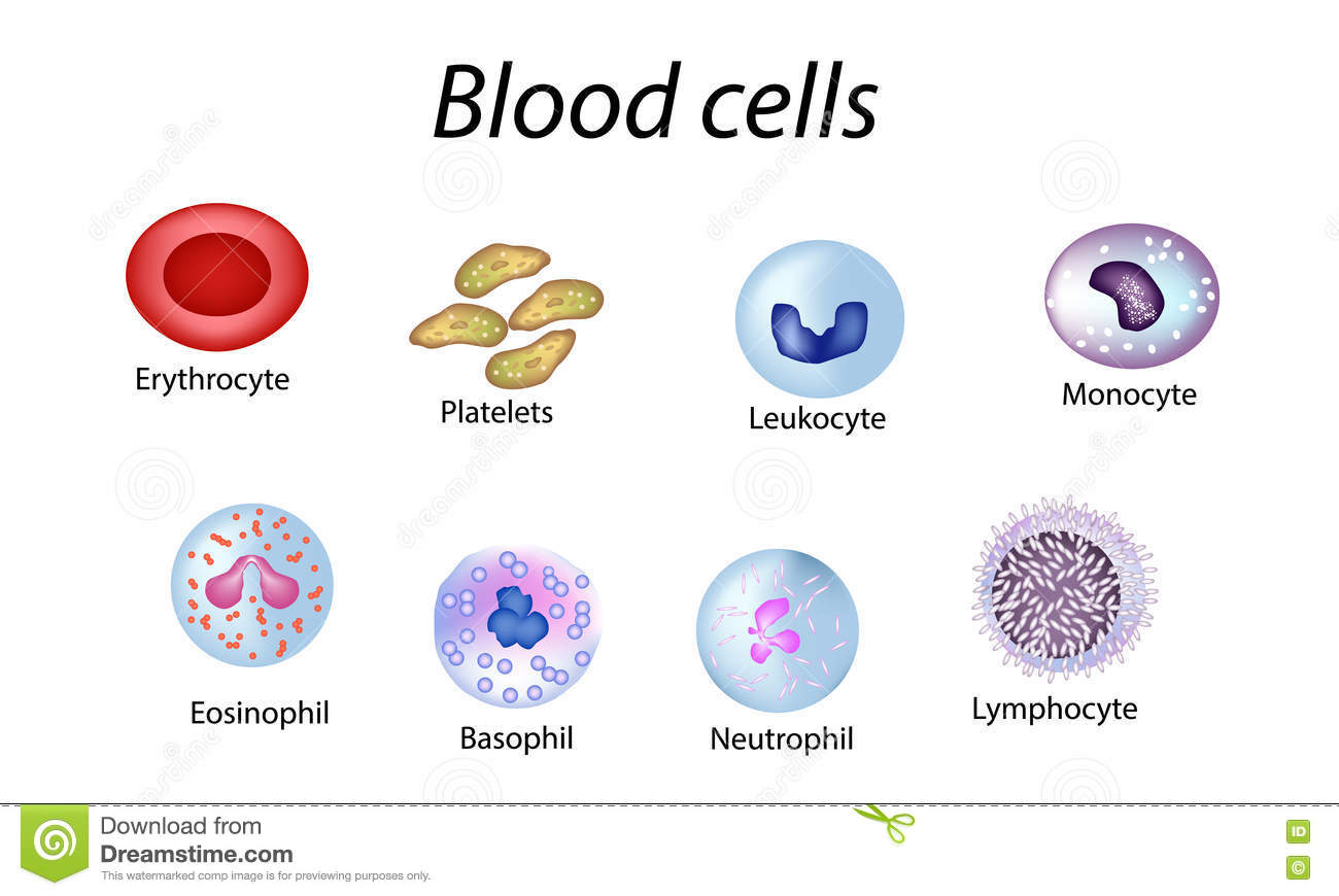 Blood Cells Set Of Colored Cells Red Blood Cells