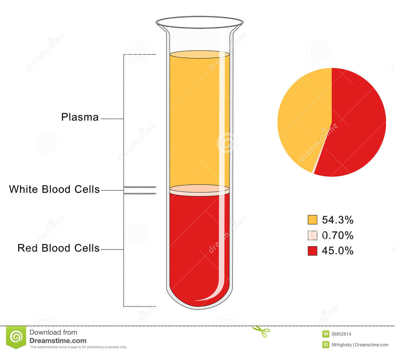 Blood Composition Stock Vector Illustration Of Liquid