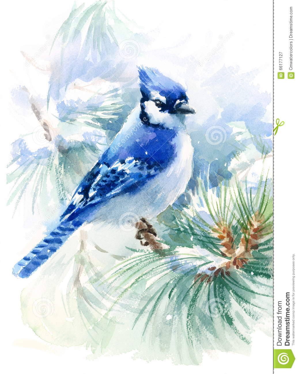 Blue Jay Bird On The Green Pine Branch Watercolor Winter