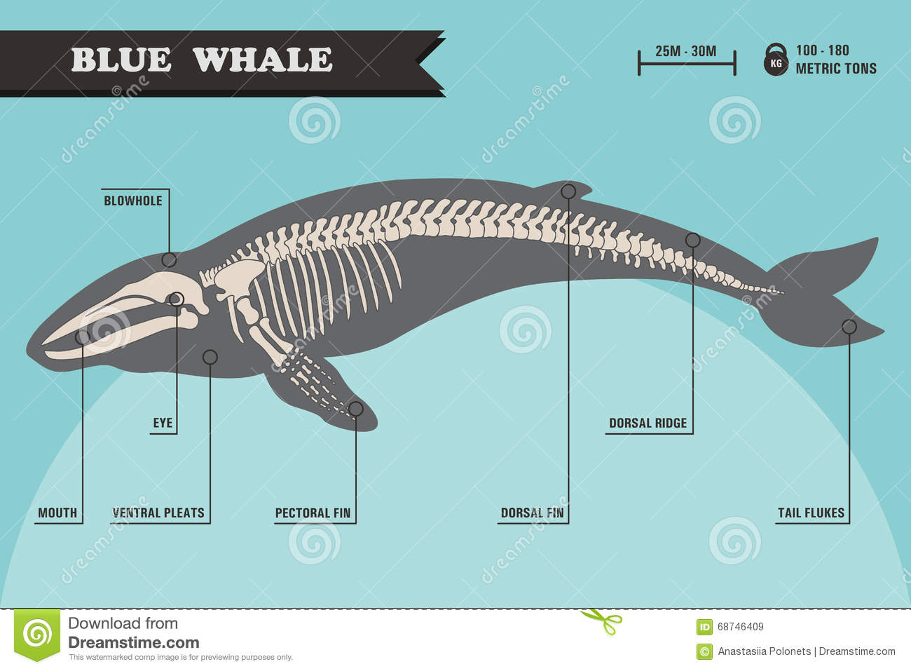 Worksheet Parts Whale