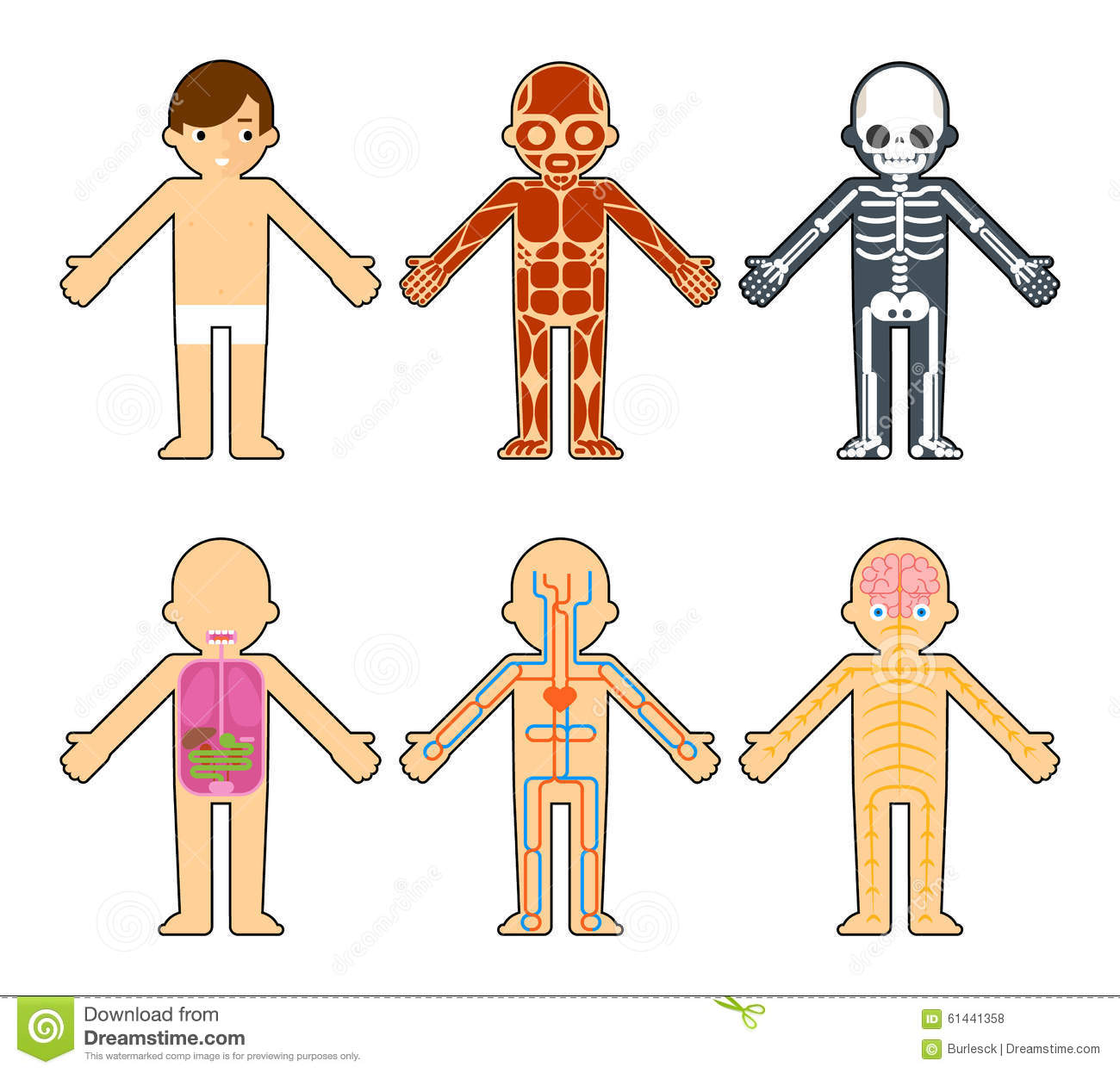 Body Systems Chart For Kids