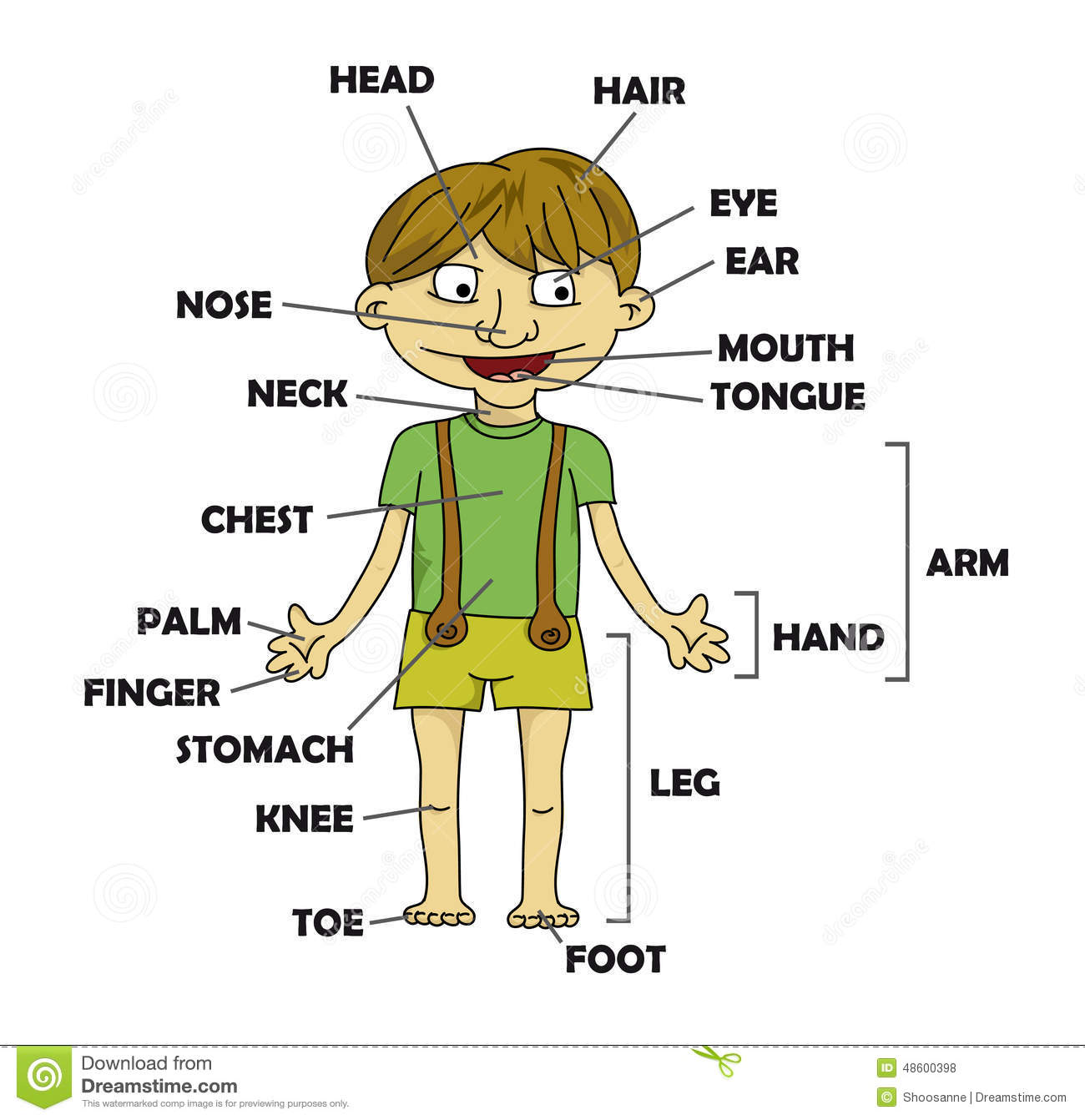 Boy Parts Of The Body Vector Stock Vector